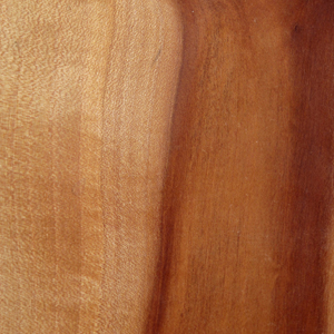 Pacific Madrone swatch