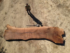 Erickson Woodworking sourcing natural wood for a live edge table