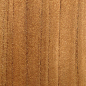 European Elm swatch
