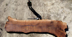 Sourcing natural wood for live edge table